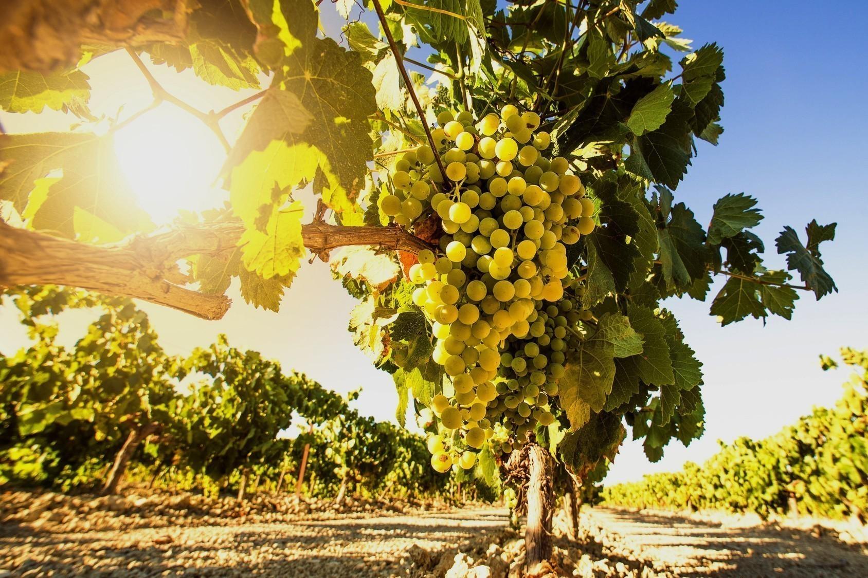 De la vigne aux clients